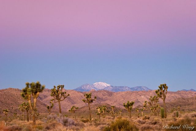 Earth Shadow over Mount San Gorgonio, Joshua Tree National Park, California, photo