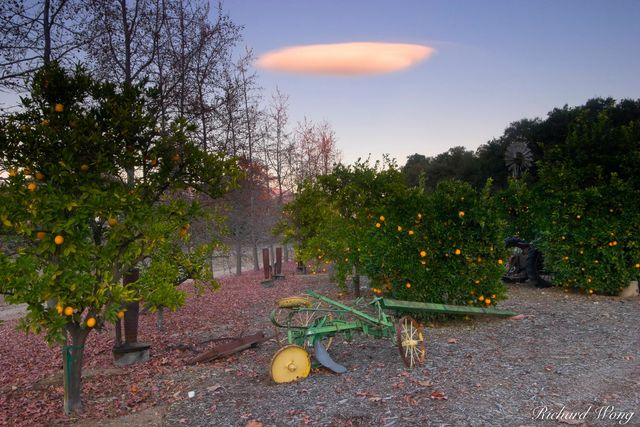The Orange Grove UFO print