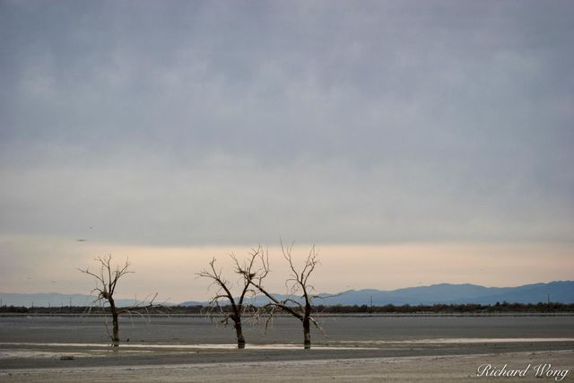 Dead Oak Trees, Sonny Bono Salton Sea National Wildlife Refuge, California, photo