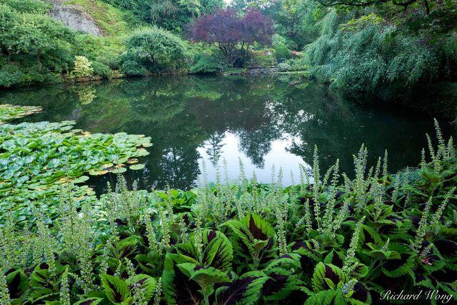 Sunken Garden Pond - Butchart Gardens, Brentwood Bay, B.C., photo