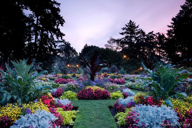 Beacon Hill Park at Sunrise, Victoria, B.C.