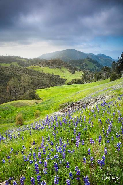 Figueroa Mountain Scenic Landscape, Santa Ynez Mountains, California
