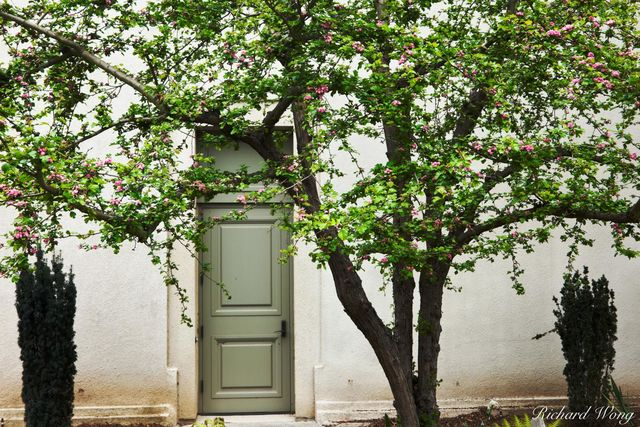 Spring Tree Flower Blossoms and Green Door to The Huntington Art Gallery, San Marino, California, photo