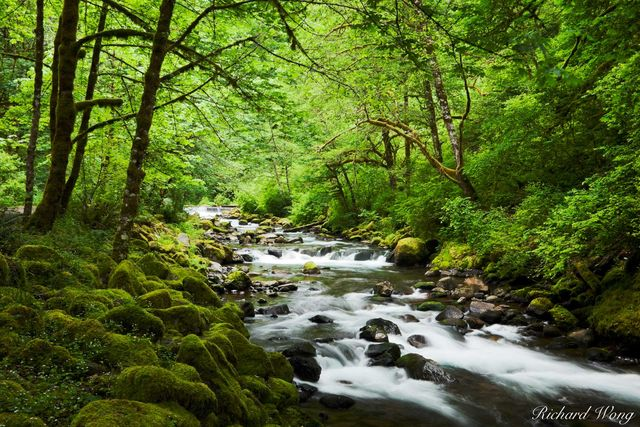 Tanner Creek, Columbia River Gorge National Scenic Area, Oregon, photo