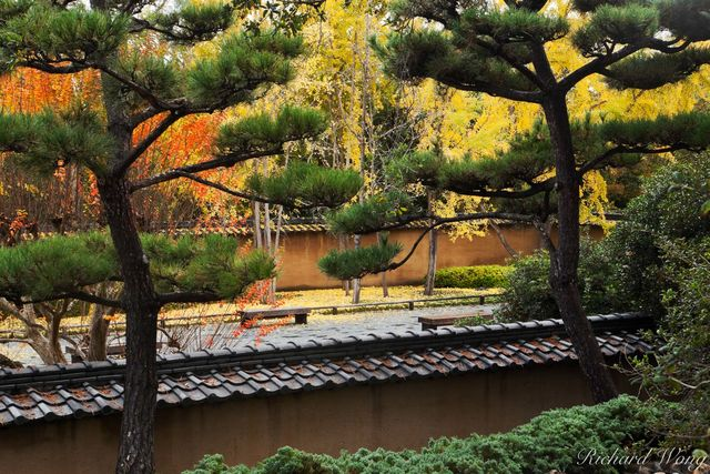 Fall Color in Japanese Garden at The Huntington, San Marino, California, photo
