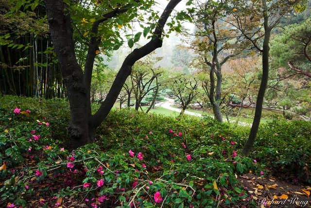 Pink Flowers and Trees in Japanese Garden at The Huntington, San Marino, California, photo
