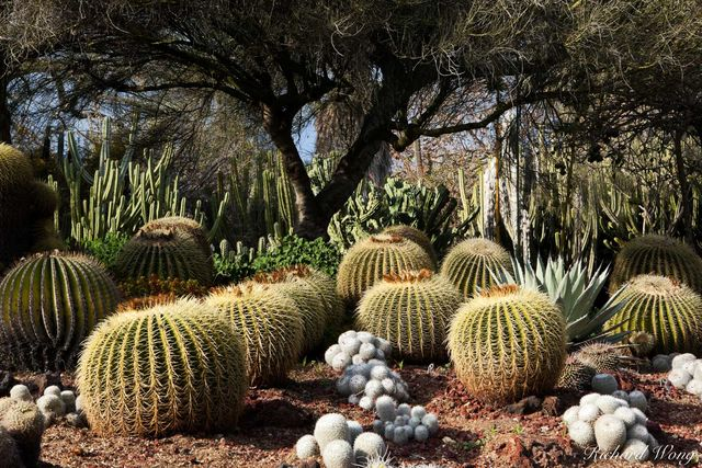 Desert Garden at The Huntington Botanical Gardens, San Marino, California, photo
