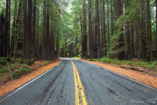 Avenue of the Giants, Humboldt Redwoods State Park, California, photo