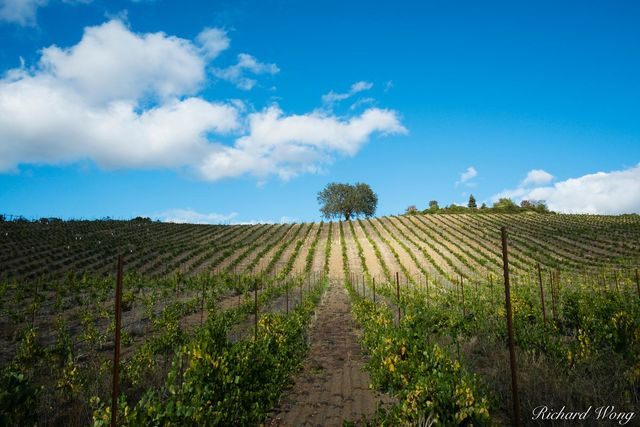 Joseph Family Vineyards, Healdsburg, California, photo