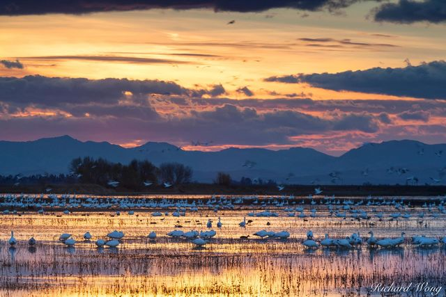 Merced National Wildlife Refuge Winter Sunset, California, photo