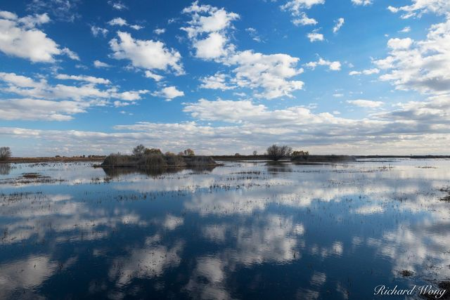 Shallow Water Reflection, Merced National Wildlife Refuge, California, photo