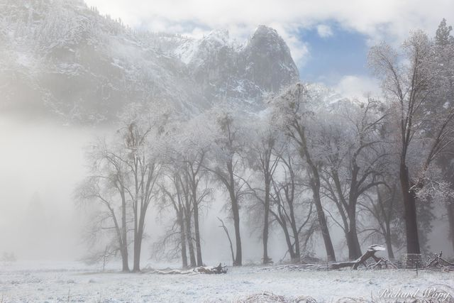 Foggy Sunrise at Cook's Meadow After Spring Snowstorm, Yosemite National Park, California, photo