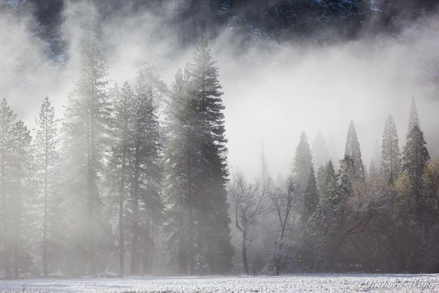 Foggy Spring Morning After Snowstorm in Cook's Meadow, Yosemite National Park, California, photo