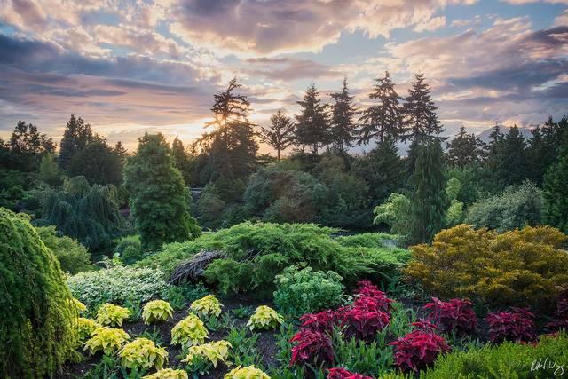 Queen Elizabeth Park at Sunset, Vancouver, B.C., photo