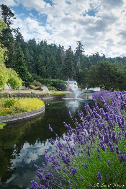 Lavender and Water Fountain at Rosario, Orcas Island, Washington, photo
