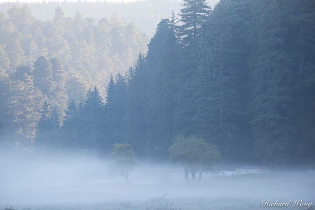 Boyes Prairie Foggy Sunrise, Prairie Creek Redwoods State Park, California, photo