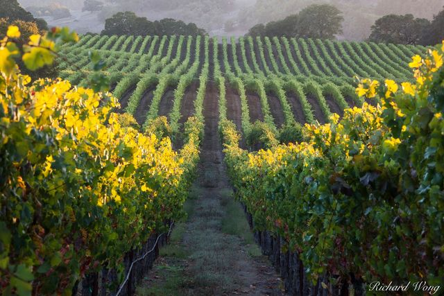 Field Stone Winery Vineyards, Alexander Valley AVA, California, photo