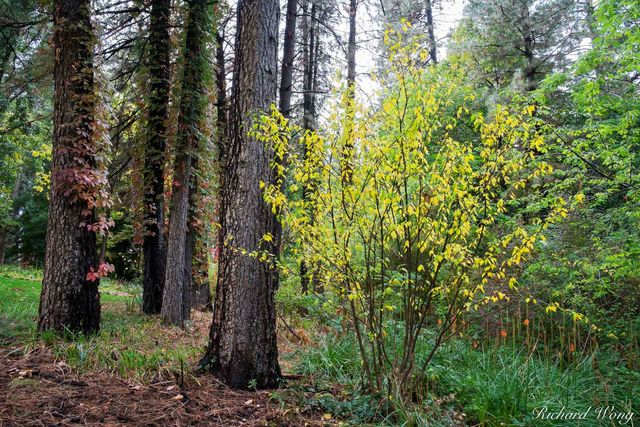 Empire Mine SHP Fall Color Forest Scene, Grass Valley, California, photo