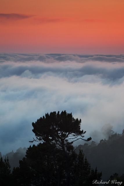 Tree in a Sea of Fog at Sunset, Berkeley, California, photo