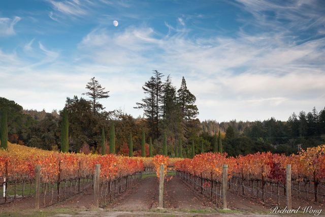 Moonrise Over Boeschen Vineyards in Fall, St. Helena, California, photo