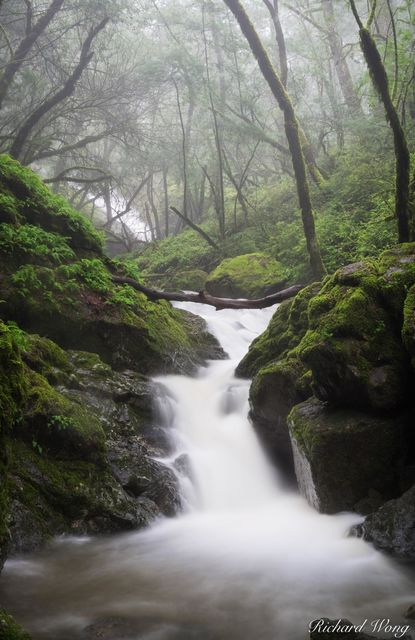 Cataract Creek Under Thick Forest in Mount Tamalpais Watershed, Marin County, California, photo