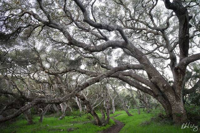 Hiking Trail / Los Osos Oaks State Natural Reserve, Los Osos, California, photo