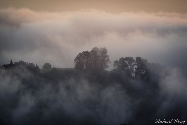 Fog in Grizzly Peak, Berkeley Hills, California, photo