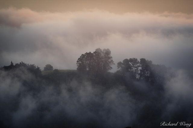 Fog in Grizzly Peak, Berkeley Hills, California