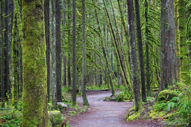 Capilano River Regional Park Hiking Trail, North Vancouver, B.C., Canada, photo