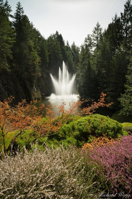 Ross Fountain, The Butchart Gardens, Spring, Vancouver Island, B.C., Canada, photo