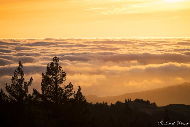 Foggy Sunset in Spring, Mount Tamalpais State Park, California, photo