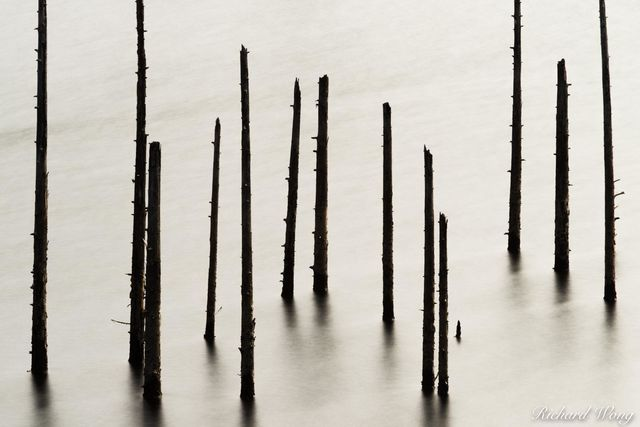 Dead Trees at Kent Lake, Marin County, California, photo