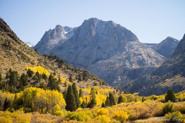 June Lakes Loop Aspen Fall Color With Carson Peak in Background, Eastern Sierra, California, photo
