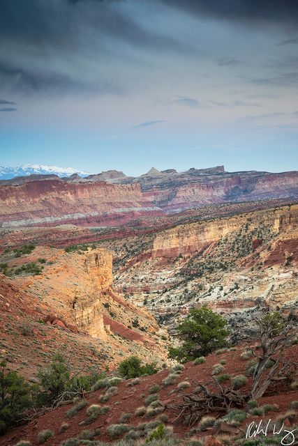 Goosenecks & Waterpocket Fold, Capitol Reef National Park Photo