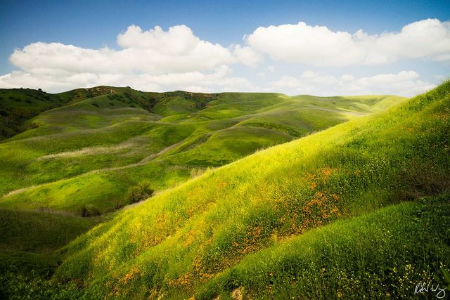 Spring Wildflowers, Chino Hills State Park, California, Photo