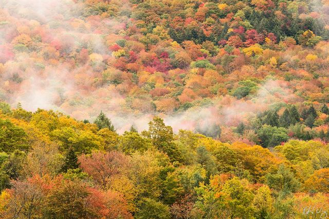 Fall Foliage & Fog, Vermont, Photo