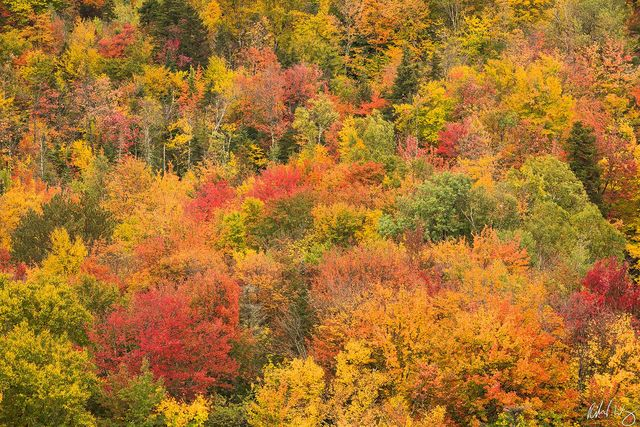 Fall Color Forest Tapestry, Franconia Notch State Park, New Hampshire, Photo