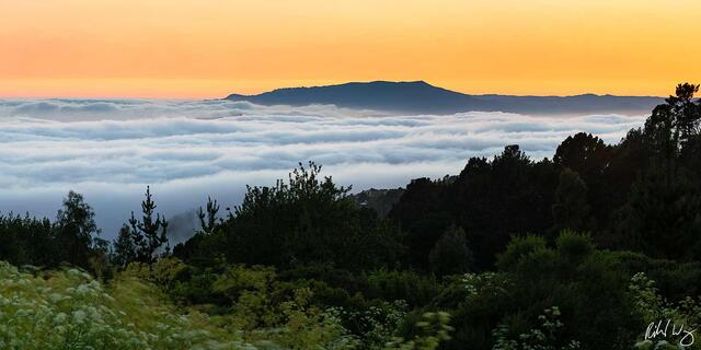 San Francisco Bay Fog at Sunset Panoramic, Berkeley, California