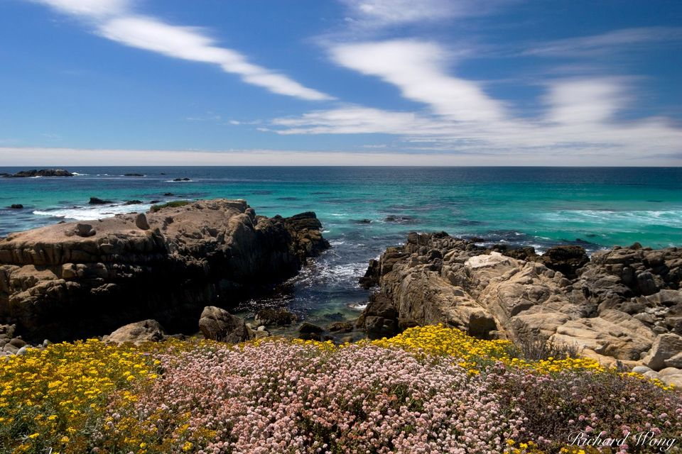17 Mile Drive Coastal Wildflowers print