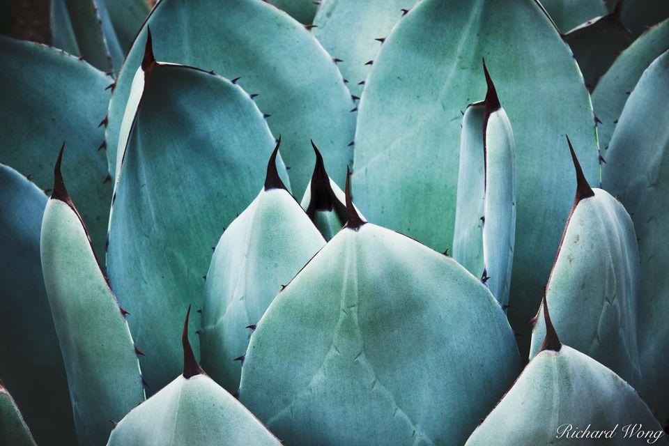 Desert Garden Agave print