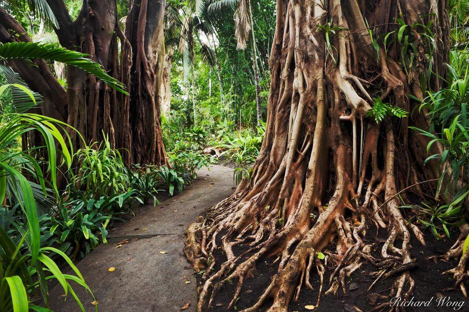 Jungle Garden print