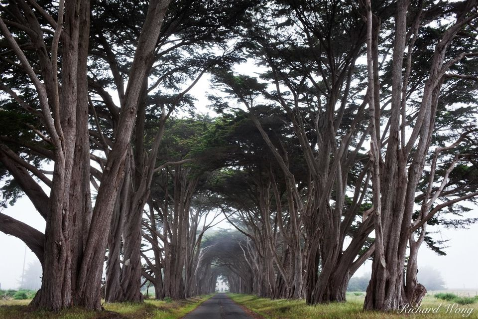Cypress Tree Tunnel print