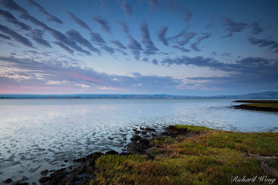 Baylands Nature Preserve print