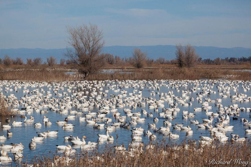 Pacific Flyway print