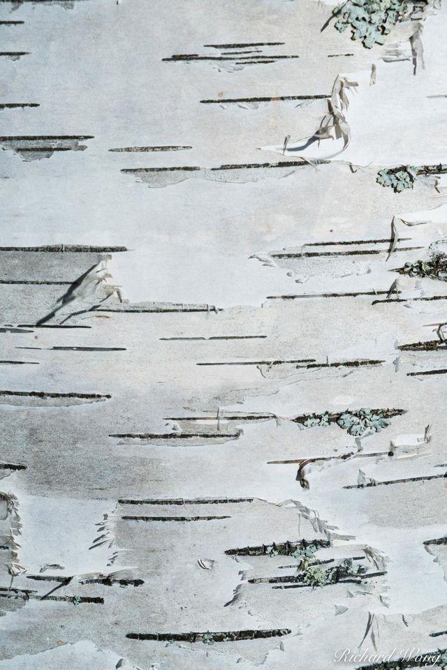 Peeling Away print