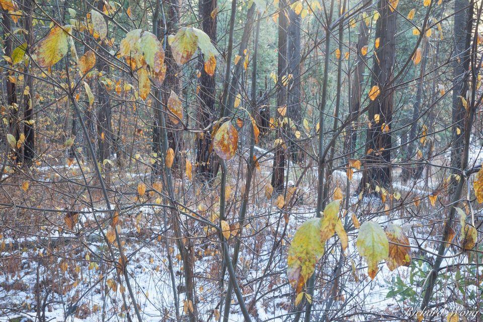 Seasonal Transition print