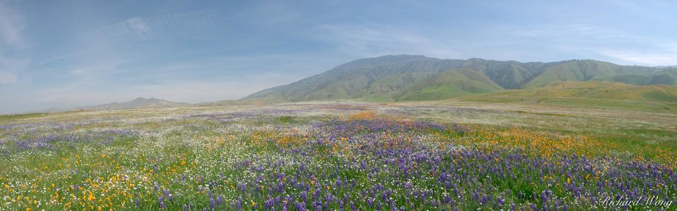 Spring Wildflowers Panoramic Landscape, Kern County, California, photo