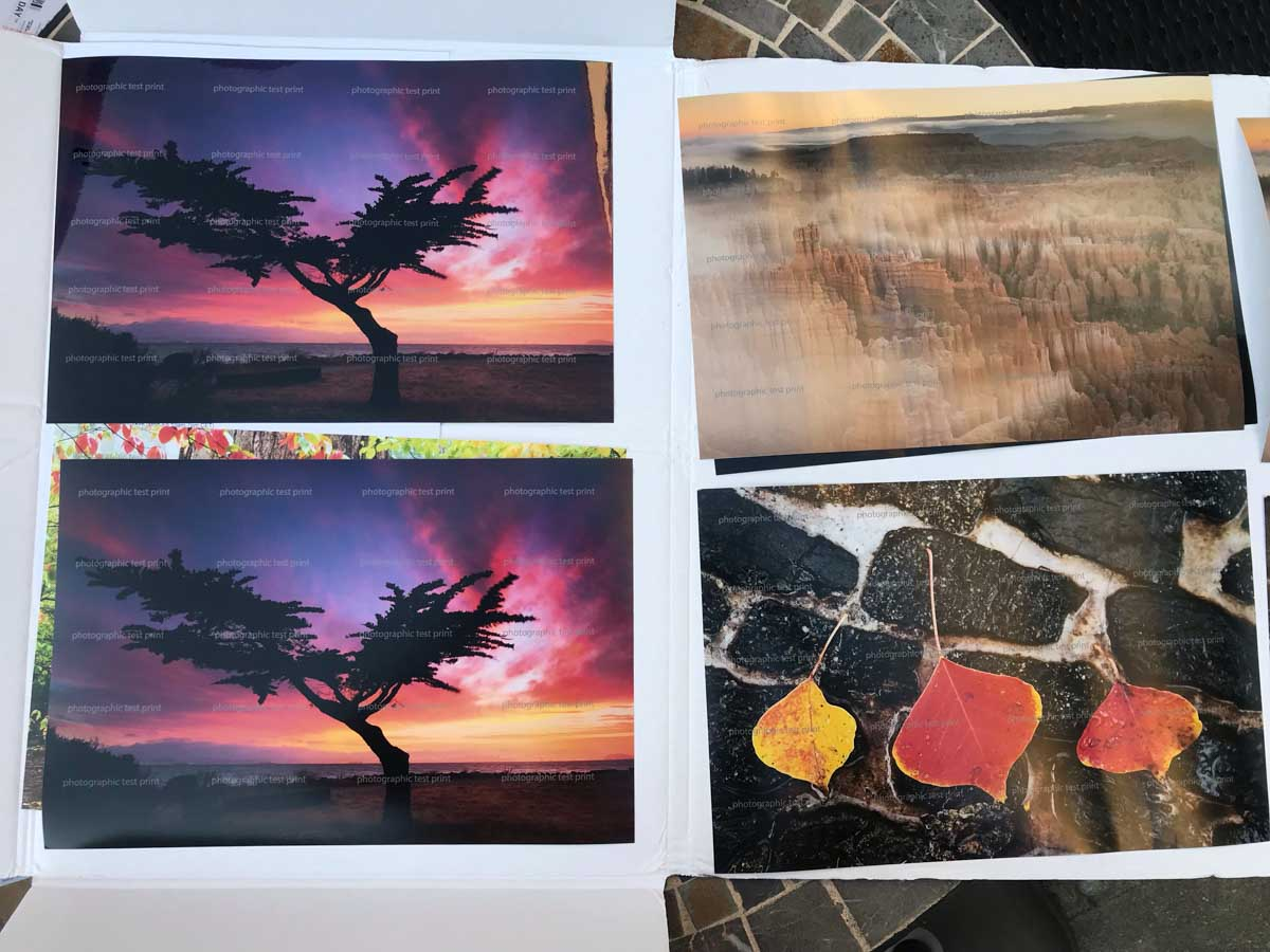 Lonesome Cypress Tree Test Prints