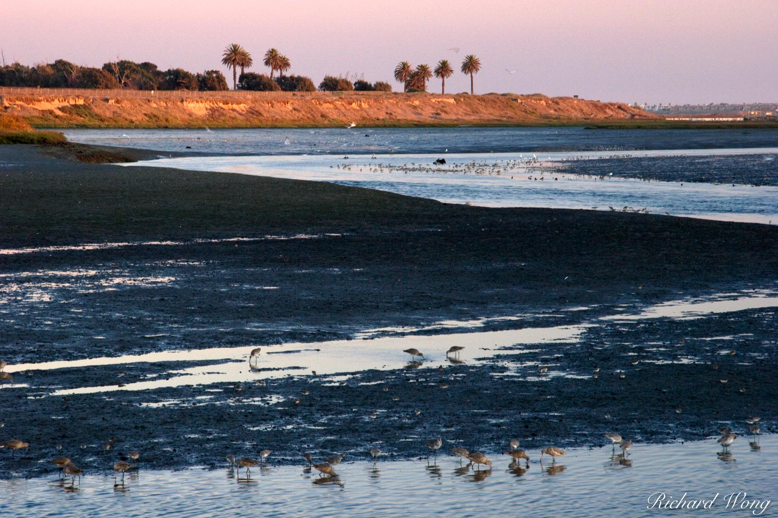 Bolsa Chica Ecological Reserve, Seal Beach, California, photo, photo