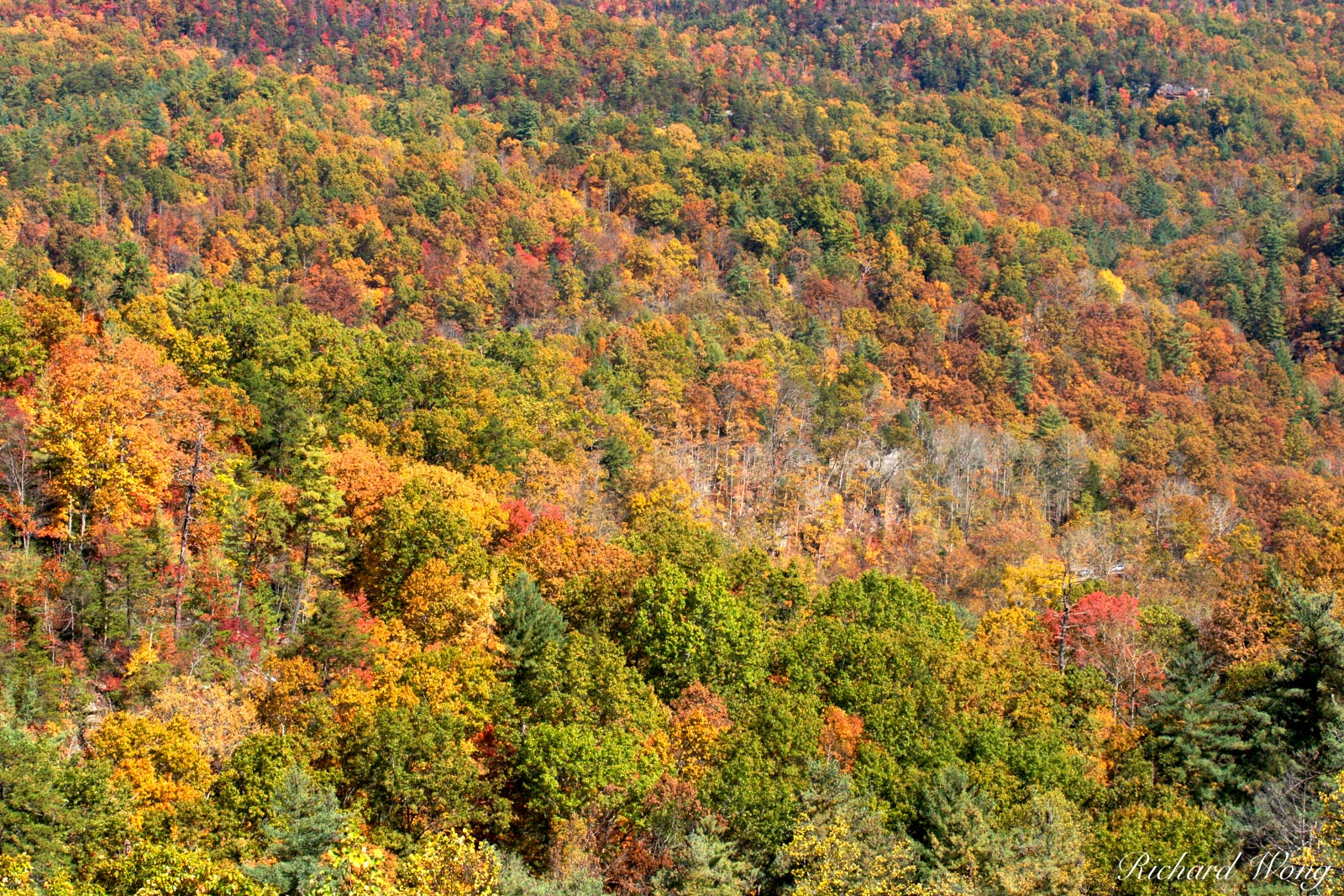 Fall Colors in Appalachia, Kentucky Covered in deciduous trees, the Appalachian Mountains in Kentucky turn magical shades of...